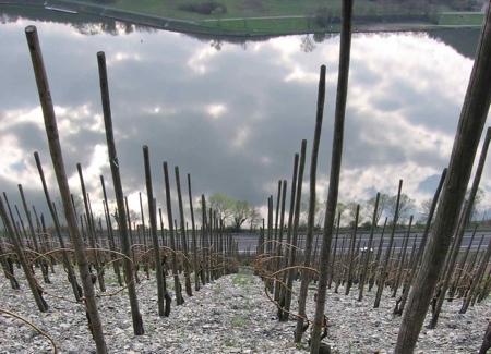 Ziemlich Steil wine grapes value value value u20 sauvignon blanc santa barbara county riesling paso robles mosel saar ruwer grenache