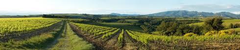 mon couerWEB wine grapes u20 syrah st joseph rhone napa grenache carneros cabernet franc