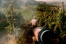 old school copper sprayWEB1 wine grapes piemonte nebbiolo cotes de beaune chardonnay burgundy barolo barbera