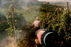 La Morra farmer sprays vines with copper ca. 2000