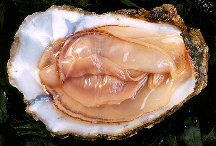 oyster sexyWEB willamette valley walla walla sonoma sauvignon blanc pinot gris paso robles oregon napa la culture eastern washington chenic blanc